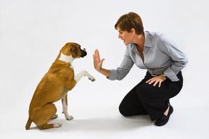 Дрессировать собаку