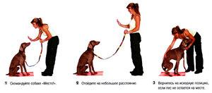 Как тренировать взрослую собаку