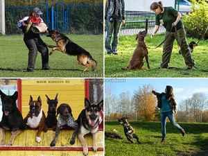 Методы правильной дрессировки собак