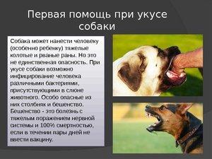 Если покусала собака какую ответственность несет хозяин