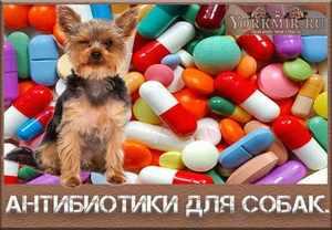 Как лечить собак