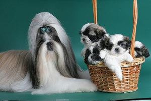 Особенности породы собак