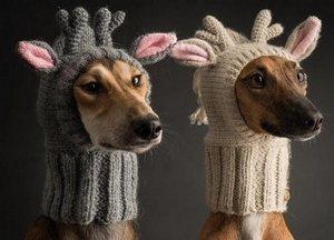 Сшить шапку собаке выкройка