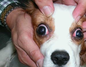 Аллергические выделения из глаз