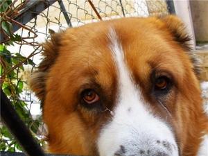 Лечение нагноения глаз у собак