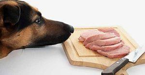 Почему собаке нельзя есть свинину