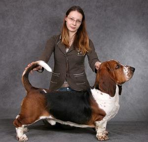 порода собак бассет хаунд фото