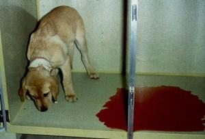 Понос с кровью