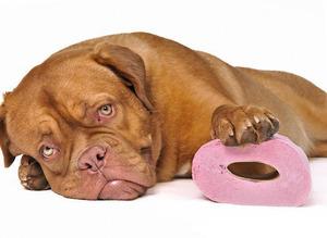 Как лечить понос у собак