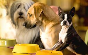 Рахит у взрослых собак и щенков: признаки, симптомы, методы лечения