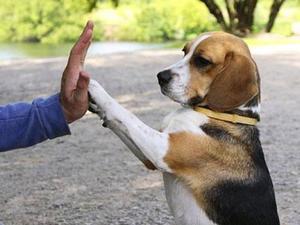 Как воспитать щенка правильно