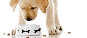 Правильный рацион питания щенка