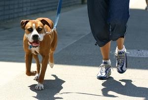 Кормление собаки должно осуществляться режимно