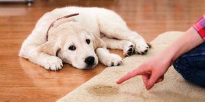 Воспитание собак: полезные советы