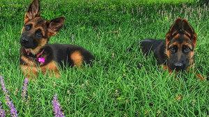 Портал о собаках: уход и дрессировка