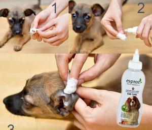 Процесс чистки ушей собаке
