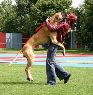 Отучить собаку прыгать на хозяина