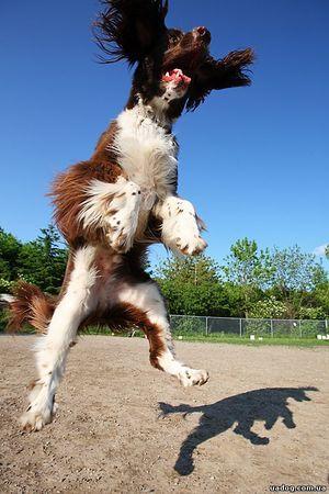 Отучаем собаку прыгать