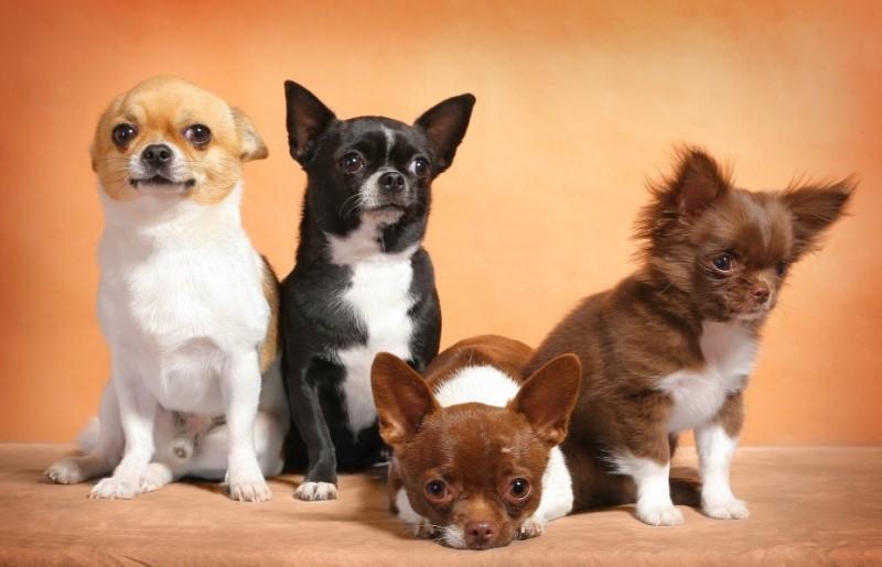 Готов ли человек принять в дом нового питомца – собаку?
