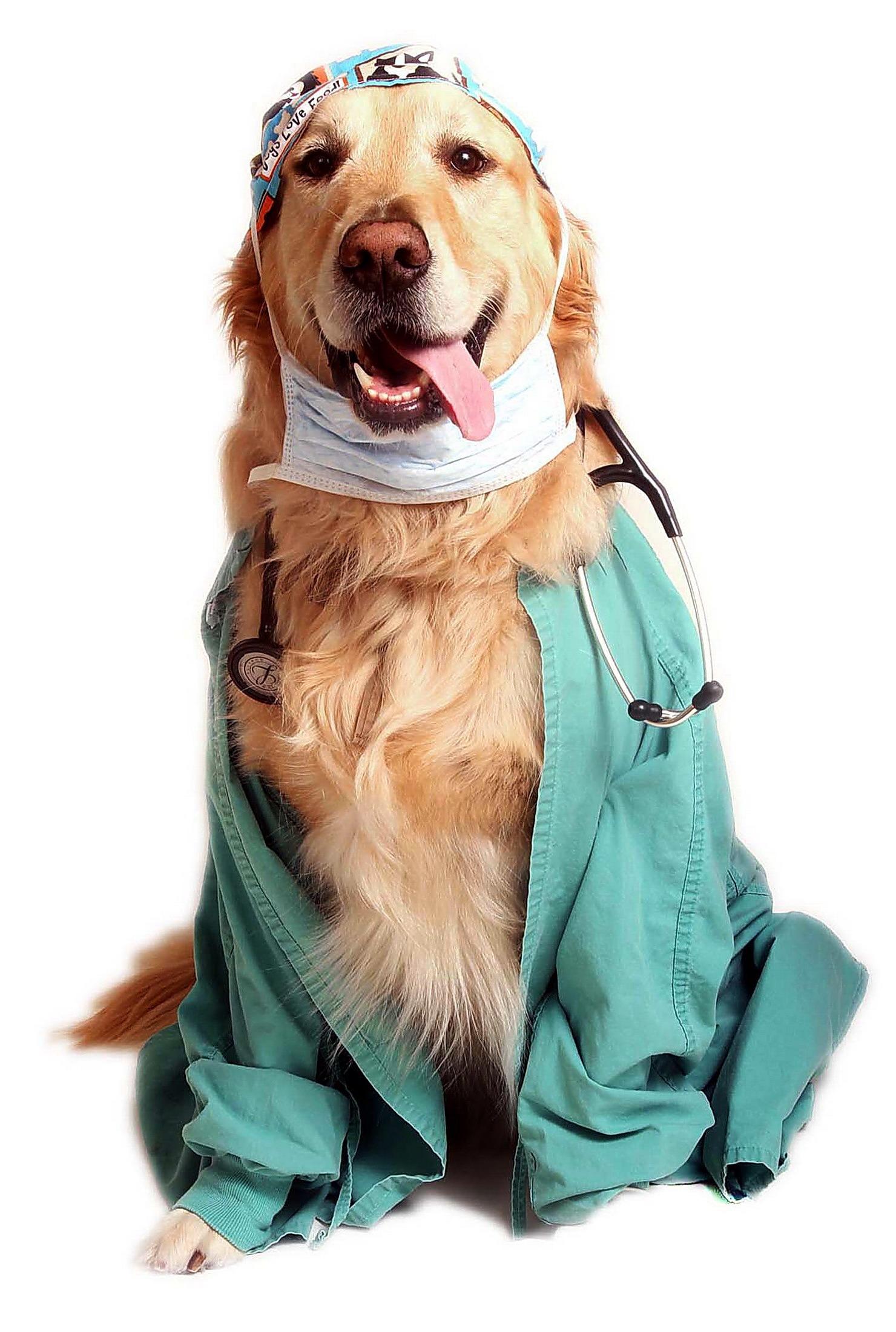 Картинка собака в халате