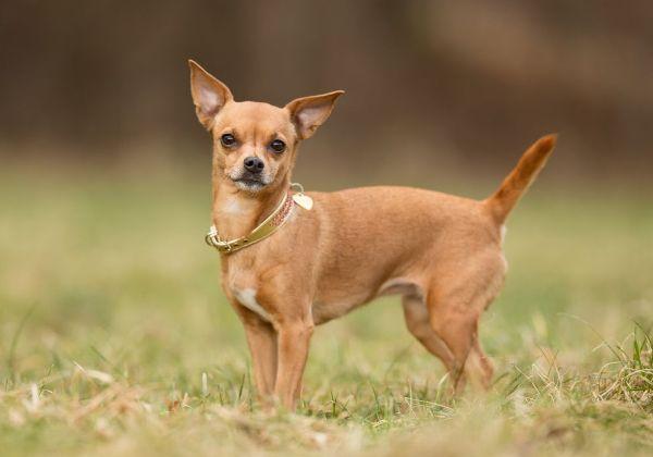 фото и породы собак маленьких описание с их