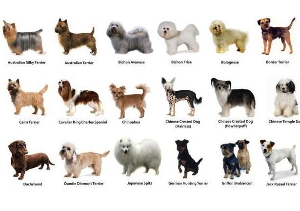 собаки некрупных пород